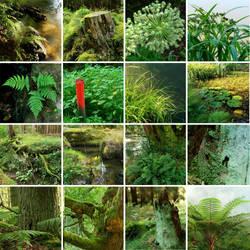 i love green by indojo