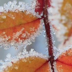 frost by indojo