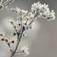 frost III by indojo