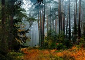 last autumn by indojo