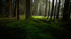 dark green by indojo
