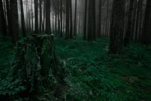 darkgreen II by indojo