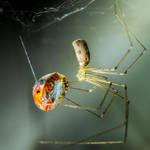 spider and laydybug by indojo