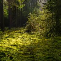 Green Carpet by indojo