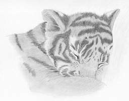 bechedor79's Tiger by samrhodes