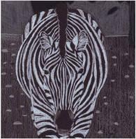Black Paper Zebra by samrhodes