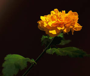 yellow flower by Arth72