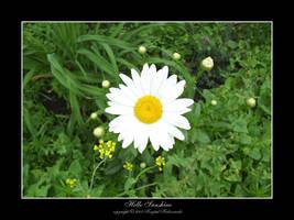 Hello Sunshine by notwhatitseems