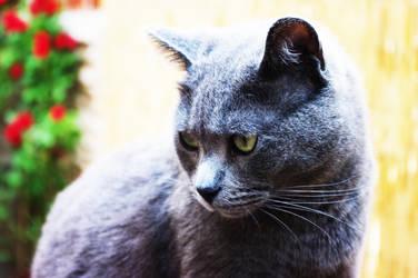 Blue Cat by F2GBcn