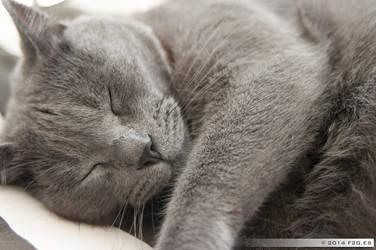 Blue cat is sleeping by F2GBcn
