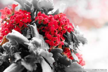 Red flowers by F2GBcn