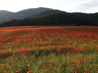 Stock- Poppy field by Zuzu136