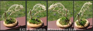 Mellers Chameleon Skeleton by BluesCuriosities
