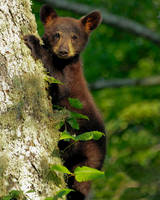 Black Bear by PhotographyDoneRight