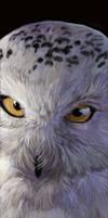 Snowy Owl by Hagge