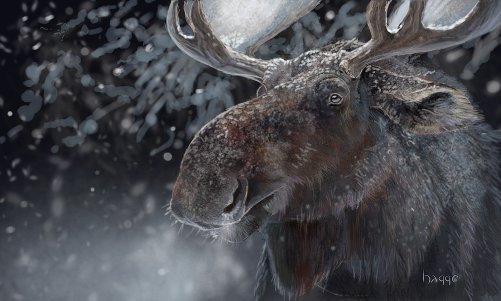 He Of Many Winters by Hagge