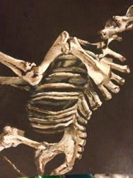 giraffe skeleton details by AKI355