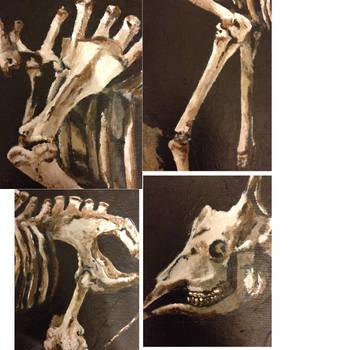 giraffe skeleton details 3 by AKI355