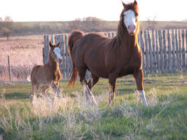 Mare and Foal 1 by okbrightstar-stock