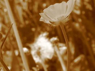 Buttercup by dontkickmycane
