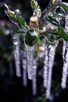 Icy Green by Nashmetro