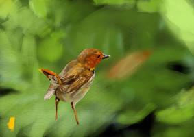 Robin Study 15 min by KigerClouds