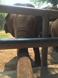 Elephant Greeting by ArcticSerpent