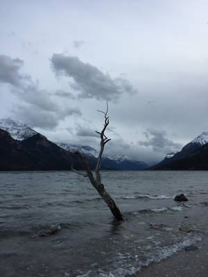 Isolation by ArcticSerpent