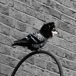 Bird dog by Triariici