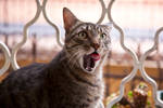 Cat expression by szorny-stock
