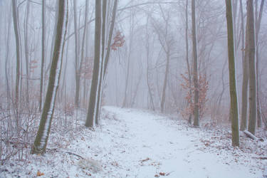 Winter scene III by szorny-stock