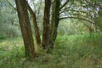 Forest Stock 2 by AsiaAndEric-Stock