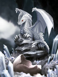 White Dragon Hatchling by dashase