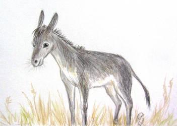 Donkey by Kaytara