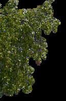 birch branches 2 by Vladlena111