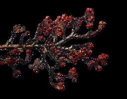 Autumn branches 5 by Vladlena111