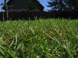 Grass1 by DaLoonie