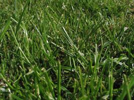 Grass2 by DaLoonie