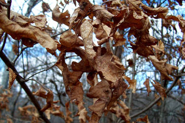 Dead Leaves by Luscara-Nature-Stock