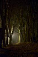 dark path by mmalkow