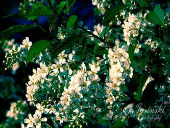 How do flower in the morning.. by FavDA