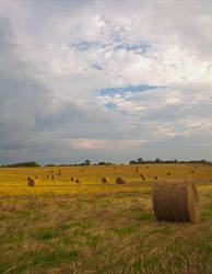 Bales in Middle Tn. by poetking