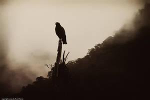 Bird of Prey by EyeDance