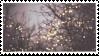 F2U Winter Lights Stamp [02] by SketchyPluto