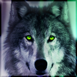 WolfKarono's Profile Picture