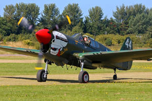 Curtiss P-40M Kittyhawk by Daniel-Wales-Images