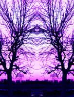 Cyclamen sky by Raffyka