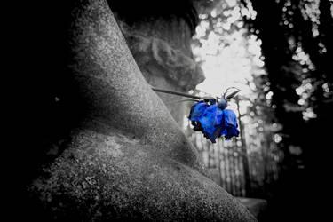 last rose by LumenDonas