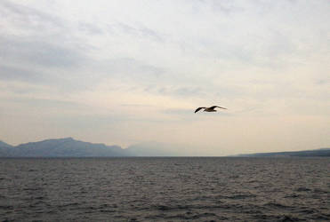 Seagull over the sea by Mitsuoka123