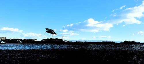 Ferry port seagull by Mitsuoka123